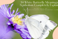 meaning of white butterfly