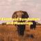 what do elephants symbolize
