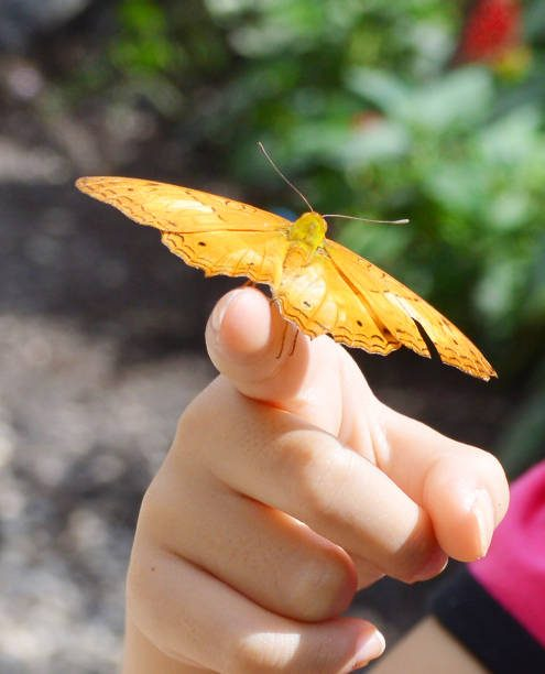 Yellow Butterfly Spiritual Meaning