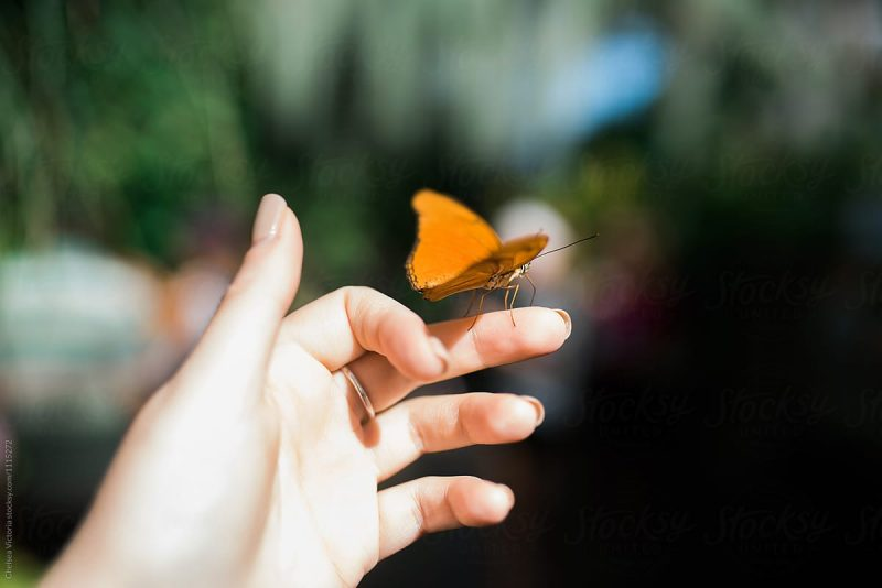 Orange Butterfly Spiritual Meaning