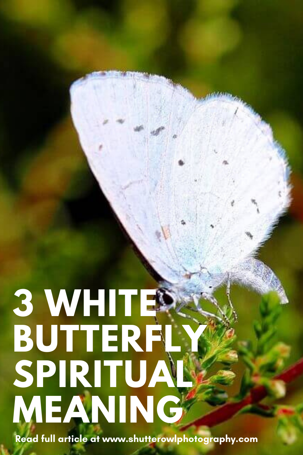white butterfly meaning spiritual