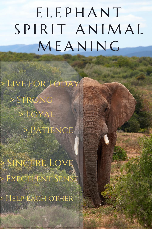 spirit animal elephant meaning