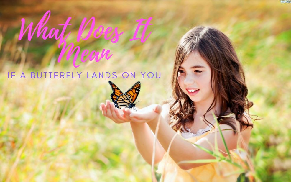 what does it mean when a monarch butterfly lands on you