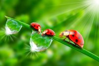 What's The Spiritual Meaning of a Ladybug?
